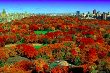 FallinCentralParkNYC